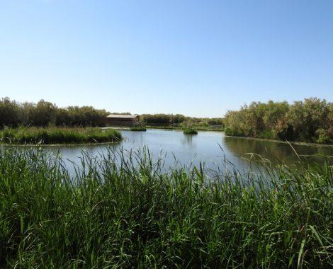 Azraq wetlands 2, ©Hazem Al Hreisha, RSCN