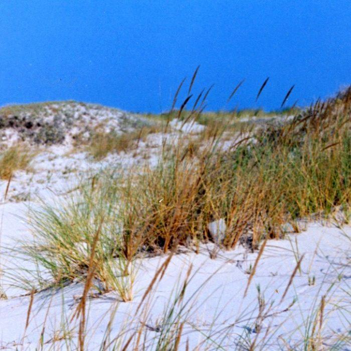 Dunes Ras rmel, Djerba, Tunisia