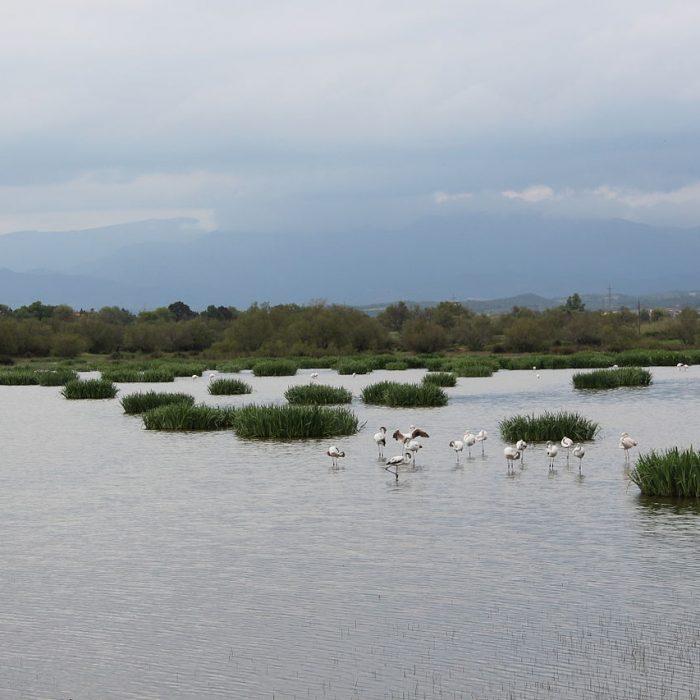 Parc Natural dels Aiguamolls de l'Empordà, by Agpoirot22, wikimedia commons