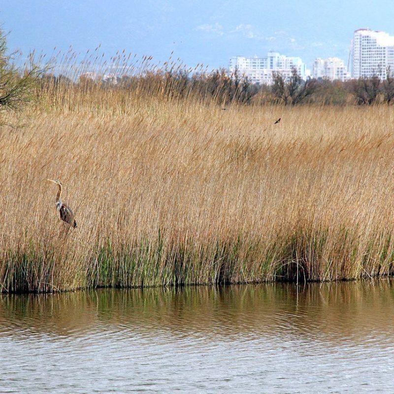 Parc Natural dels Aiguamolls de l'Empordà, by Maria planas aulet, wikimedia commons