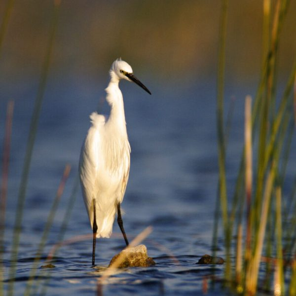 birds in Vransko Lake, photo by Goran Šafarek
